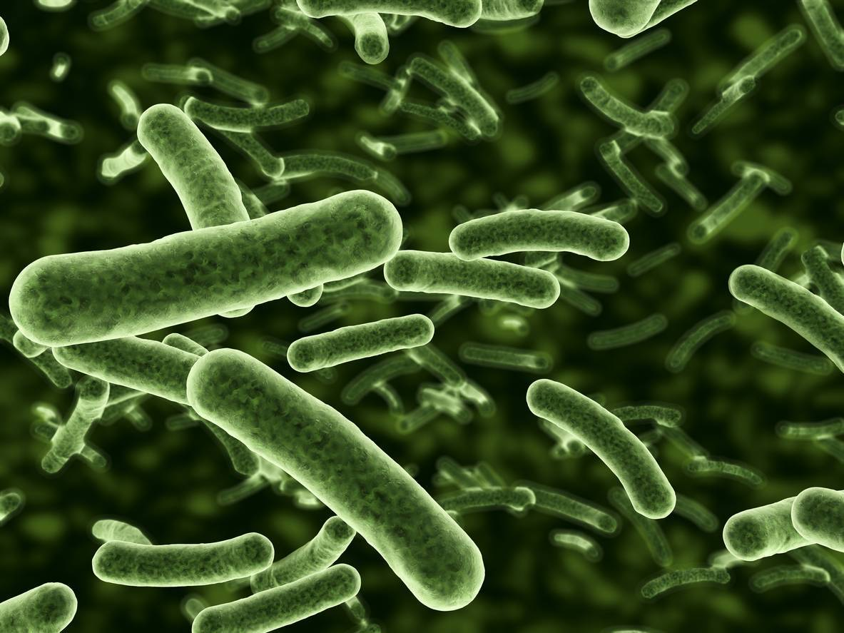 Should I Take a Probiotic?