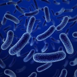 Beneficial Bacteria & Weight Loss