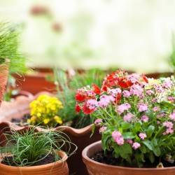 Starting Gardening - Your How to Guide