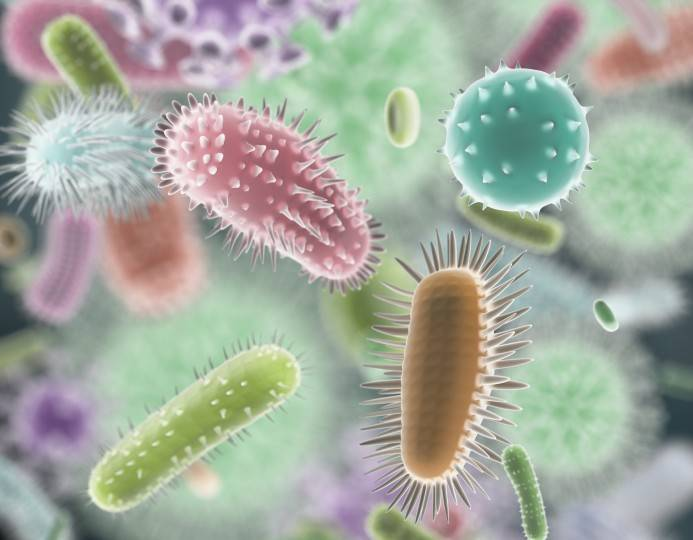 How to Find Out if You Have a Healthy Microbiome