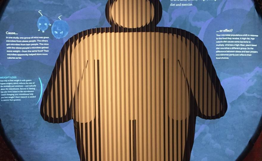 The Secret World Inside You - Obesity (2)